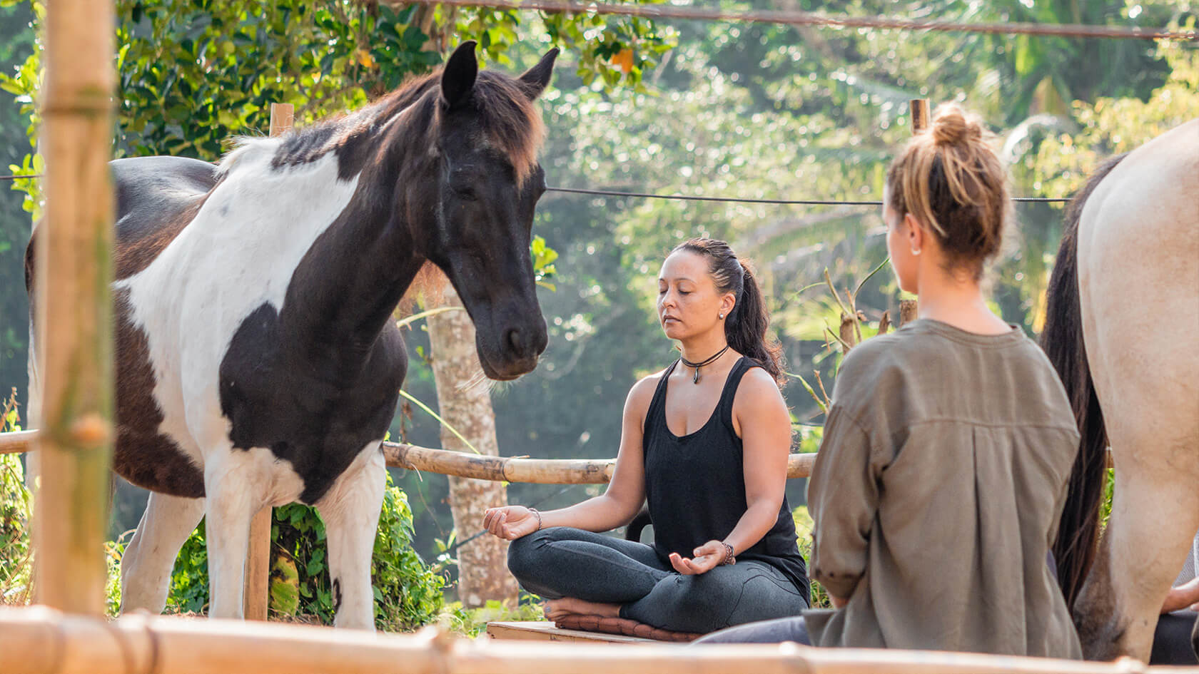 GROUP HORSE MEDITATION